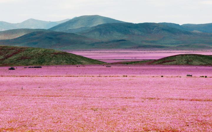 Atacama-Desert-EFE-large.jpg